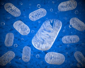 Mitochondria on a blue background